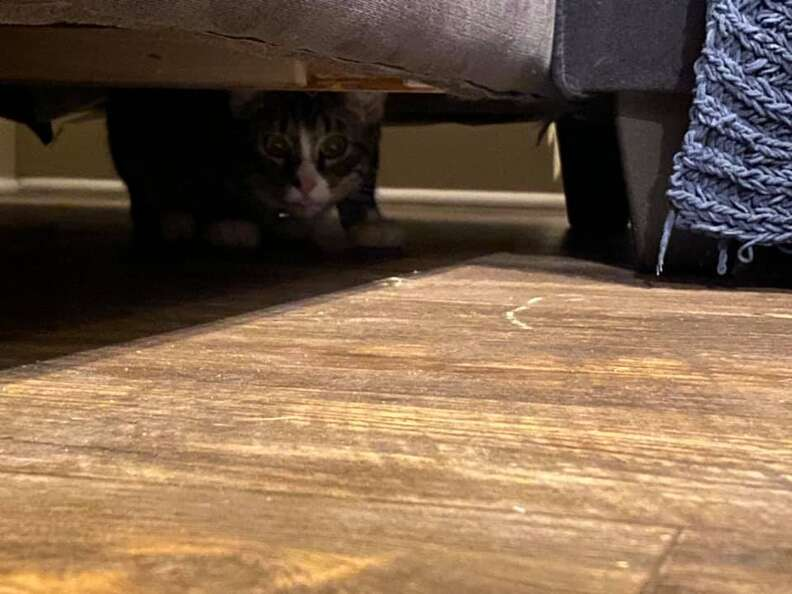 Cat hides in couch