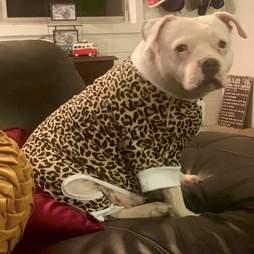 dog wearing pajamas
