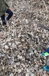 dog hidden in pile of leaves