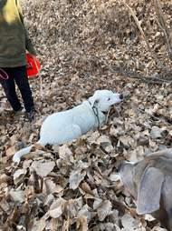 dog finds stick