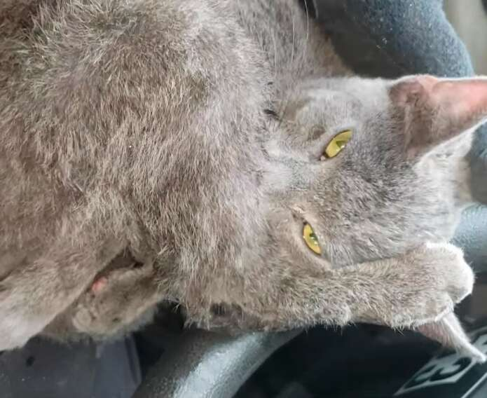 Kitten saved from Lodge Freeway