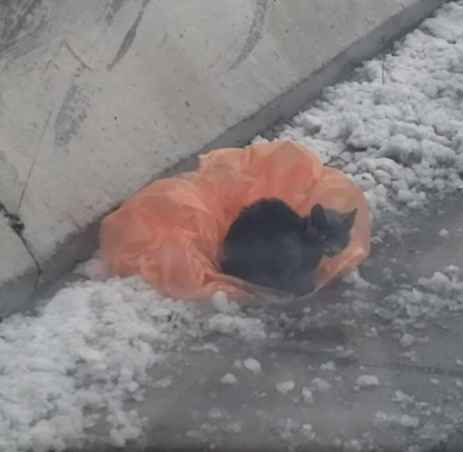 Kitten found on freeway median
