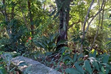 Forest Bathing Hawai'i