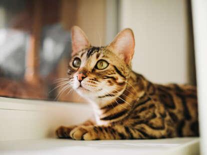 Cute cat sitting in the window