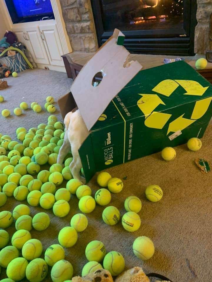 dog tennis balls