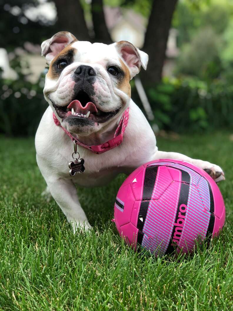 dog loves balls