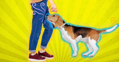 why do dogs smell your crotch