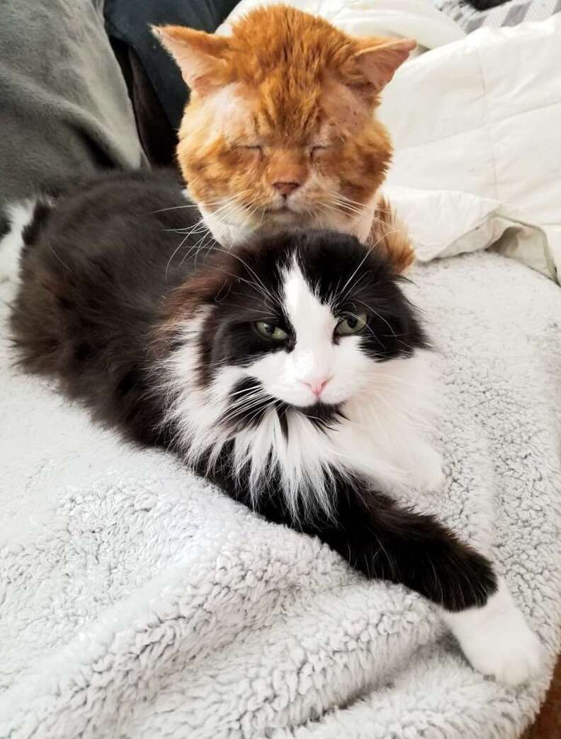 Aslan the rescue cat makes friends at his foster home