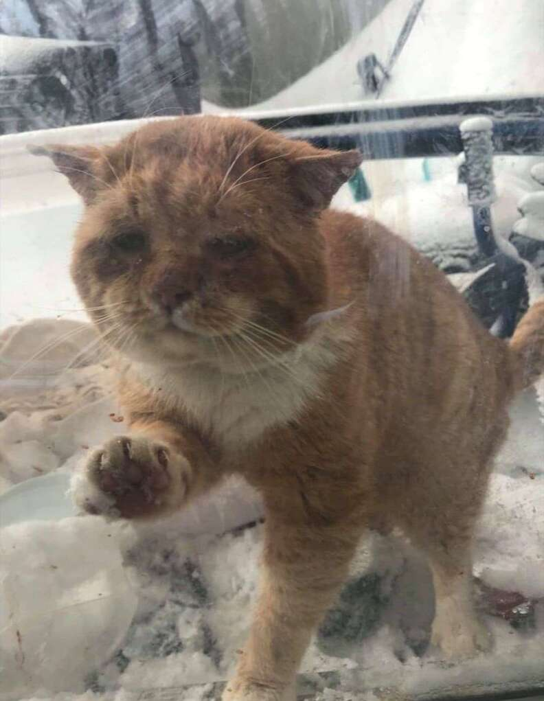 Stray cat asks to come inside