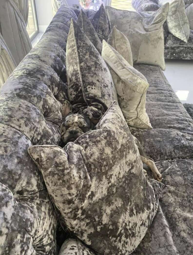 Spot the dog in the sofa