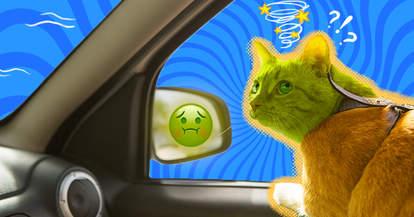 cat gets carsick