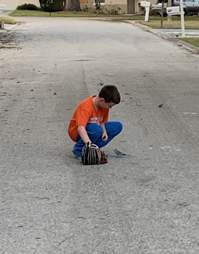 Stray parakeet asks boy for help
