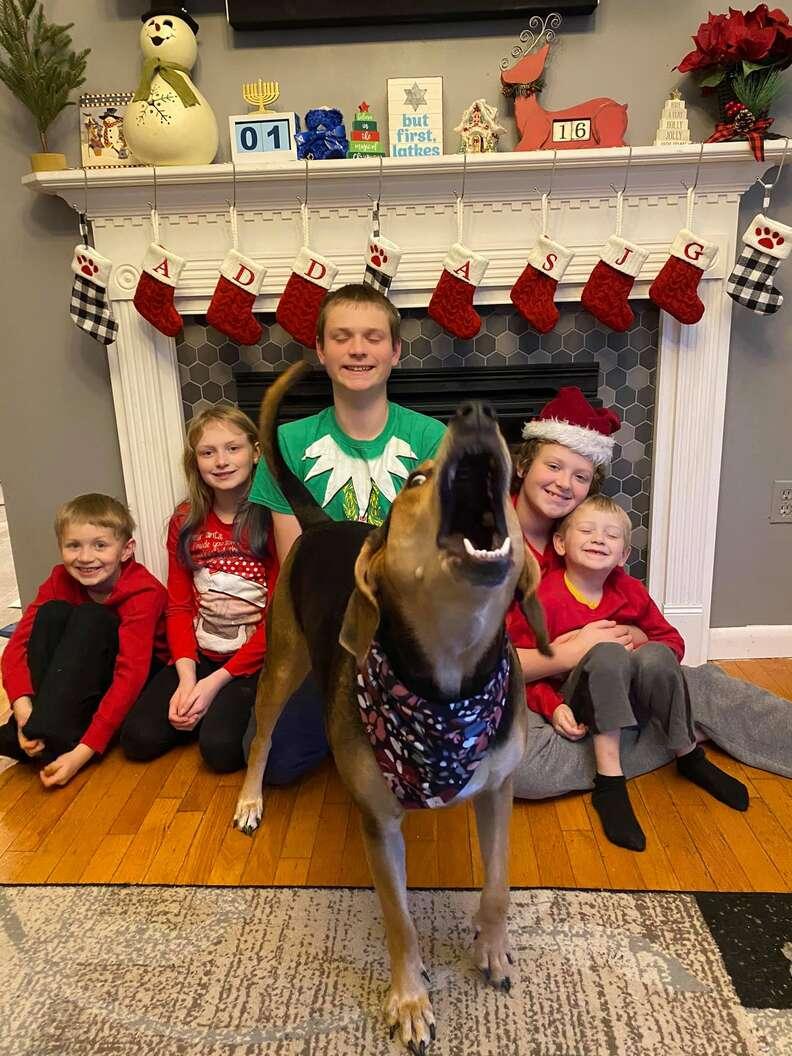 dog Christmas card photo shoot