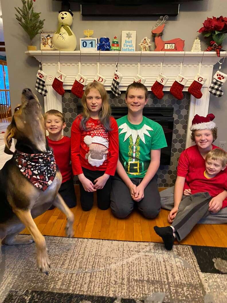 dog Christmas card photos