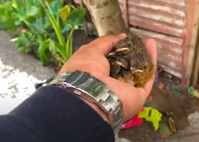Man saves baby birds after storm