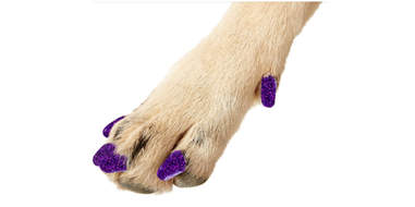 Sparkly nail covers for dogs