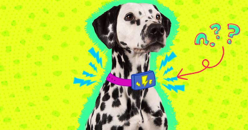 shock collar on a dog