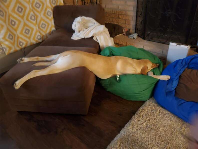 Dog sleeps in funny positions