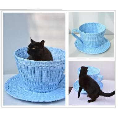 Her very own cat-sized teacup