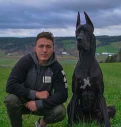 Great Dane looks like Batman