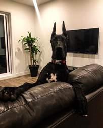 Dog looks like Batman superhero