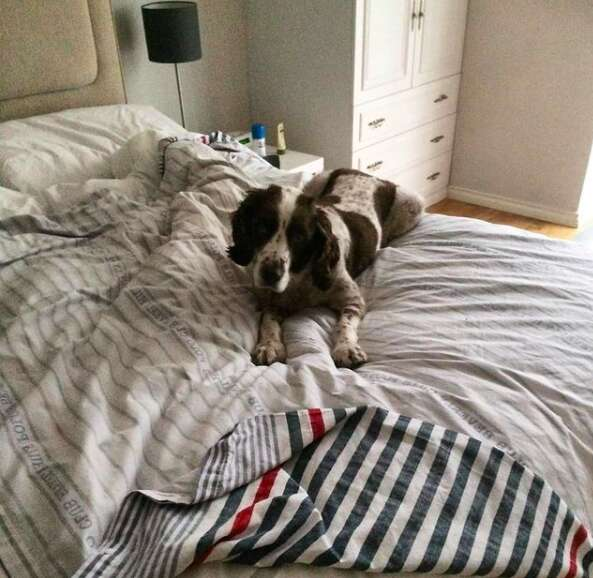 Dog demands to sleep in bed with his family
