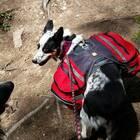Ruffwear   Palisades Dog Pack