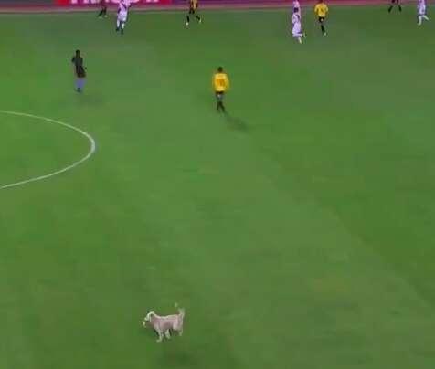 Stray dog runs onto soccer pitch