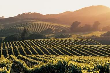 four seasons napa vineyard