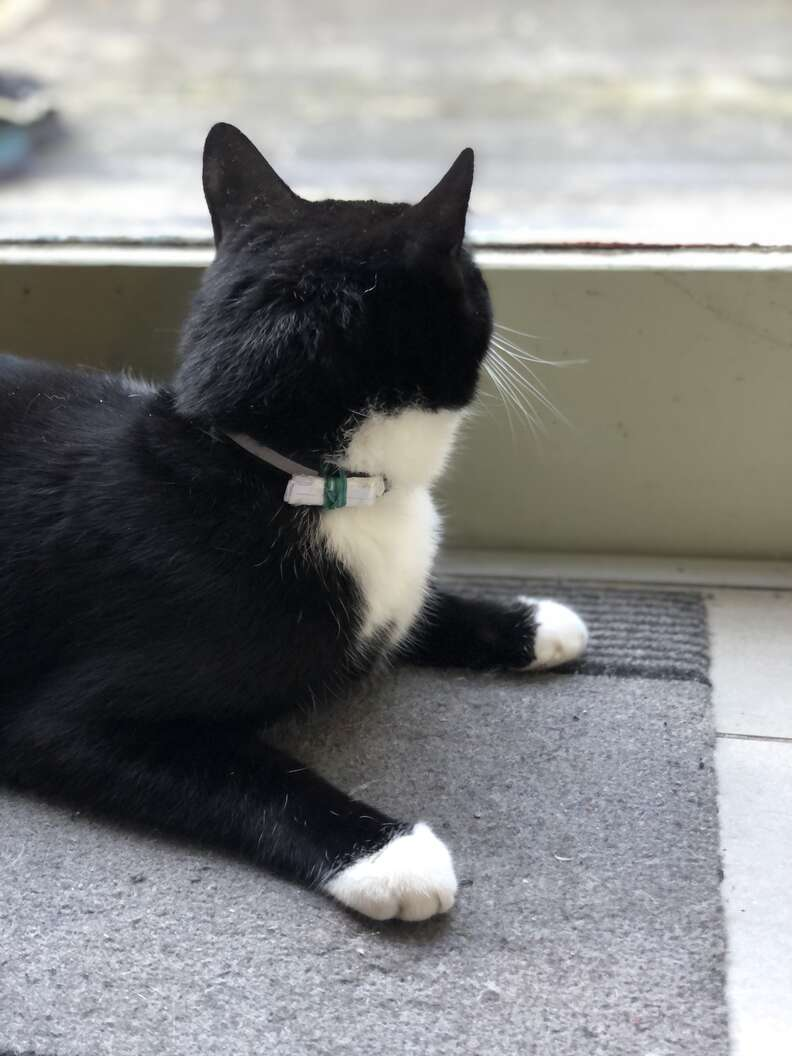 Man finds a note on his cat's collar