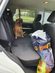 Dog jumps in unlocked car