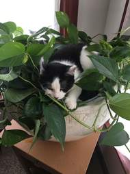 cat sits in plant