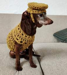 Guy crochets outfit for senior Chihuahua