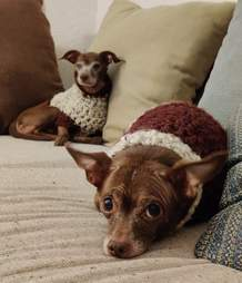 Man knits sweaters for foster dogs