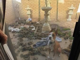 dog destroys courtyard