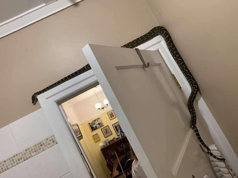 snake in bathroom