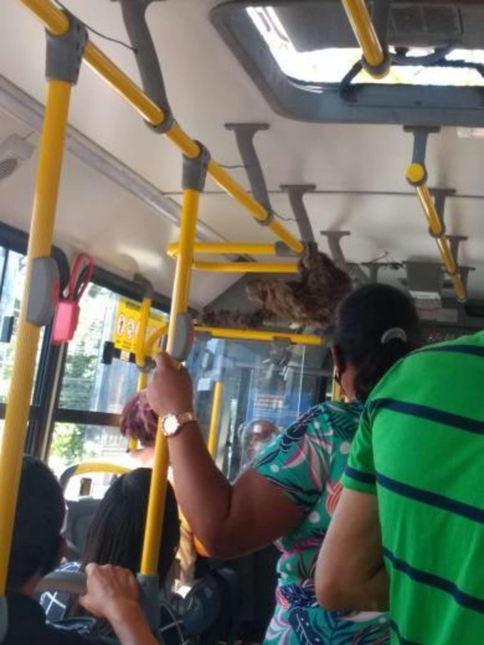lajhár, buszsofőr