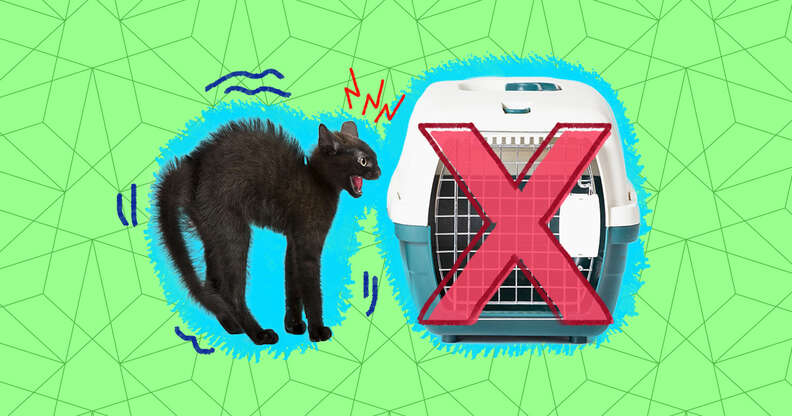 how to get a cat in a carrier