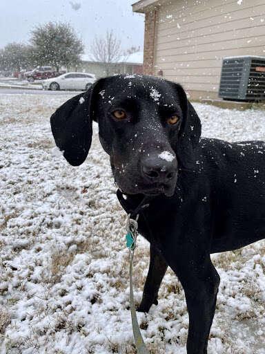 texas dog first snow
