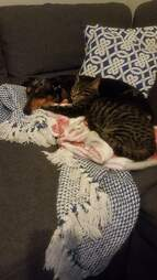 dog naps with cat