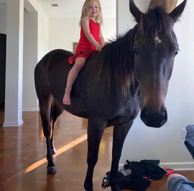 Girl Sneaks Horse Into Her Room - The Dodo