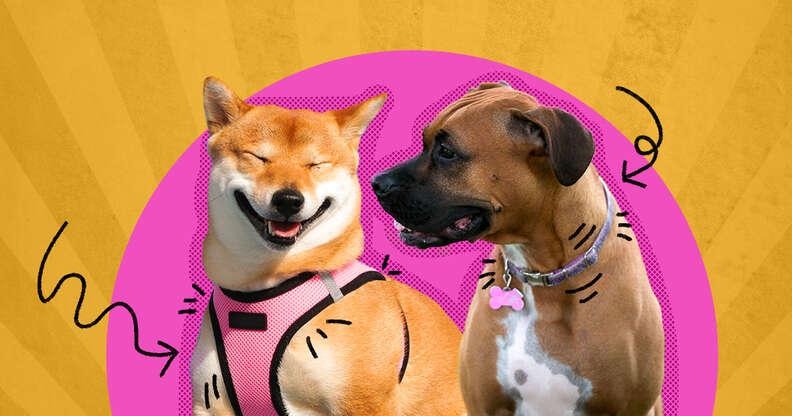 best dog harness vs collar