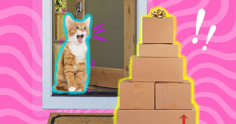 cat with Amazon boxes