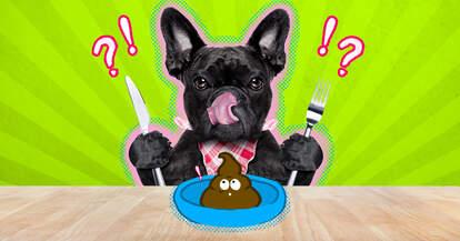 Dog eating own poop