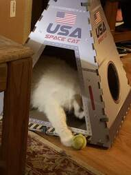 cat plays with space capsule
