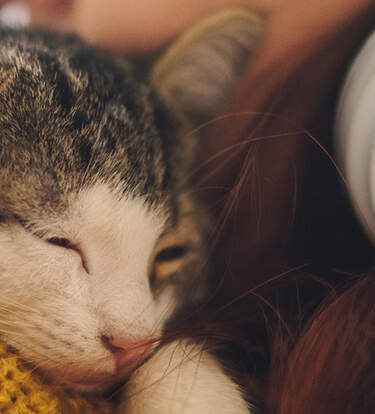 The Best Gifts For New Cat Parents