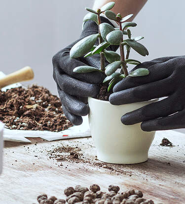 16 Eco-Minded Gifts for Plant Parents