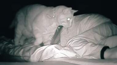 Woman films her cat keeping her up at night