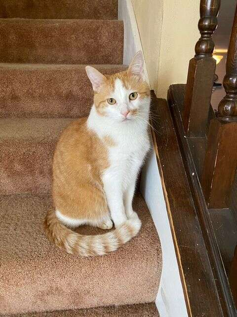 cat sits on stairs