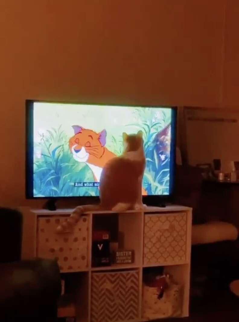 cat watches movie